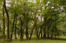 park ołtarzew 10