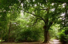 park ołtarzew 15
