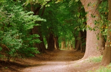 park ołtarzew 3