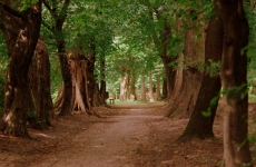 park ołtarzew 4