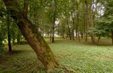 park ołtarzew14